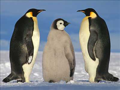 02_pinguins.jpeg