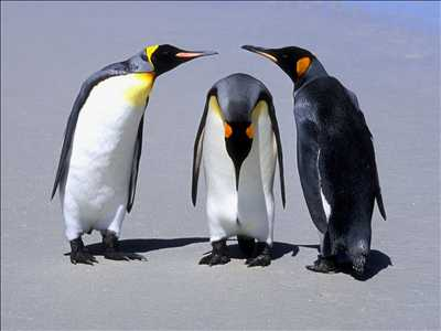 09_pinguins.jpeg