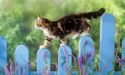 Блудный кот гулял 16 лет