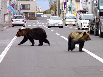 Медведи-взломщики утащили мешок семечек