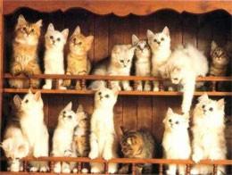 Жена предпочла мужу 550 кошек