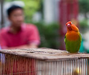 Попугая-матершинника не пускают к детям