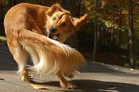 Хвост помог собаке выжить