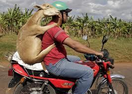 Жену обменяли на козу