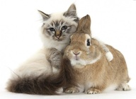 Милые животные делают людей агрессивными