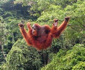 Орангутанг эвакуировал 3 тысячи человек