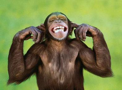 Шимпанзе требуют признать