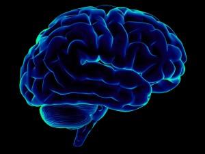 Новый способ записи знаний в мозг человека