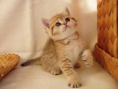Плюшевую кошку спасали всей деревней