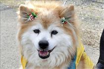 Самая старая собака в мире умерла